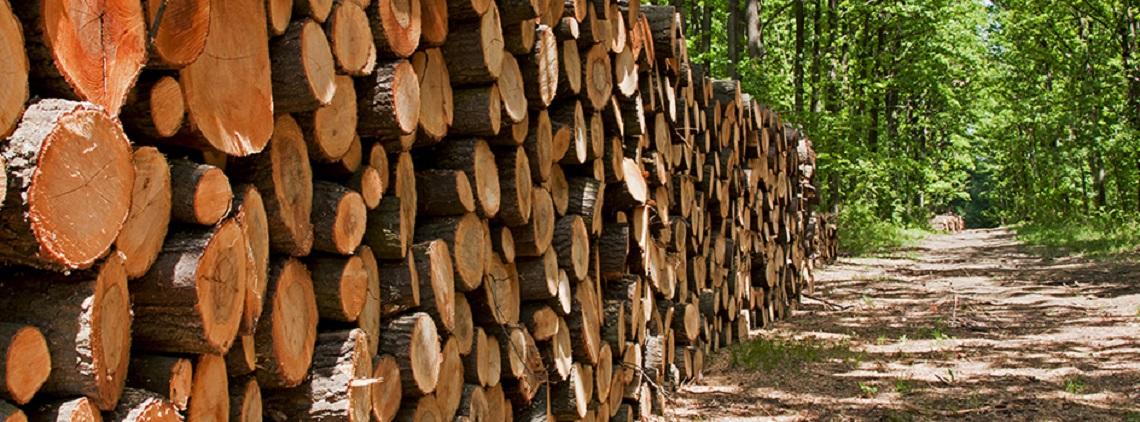 Bois écologique - environnement - Bio création Bois