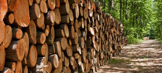 Choix de bois éco-sourcé et éco-responsable