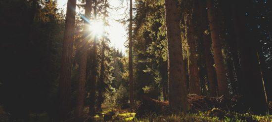 forêt écogéré - biocréationbois