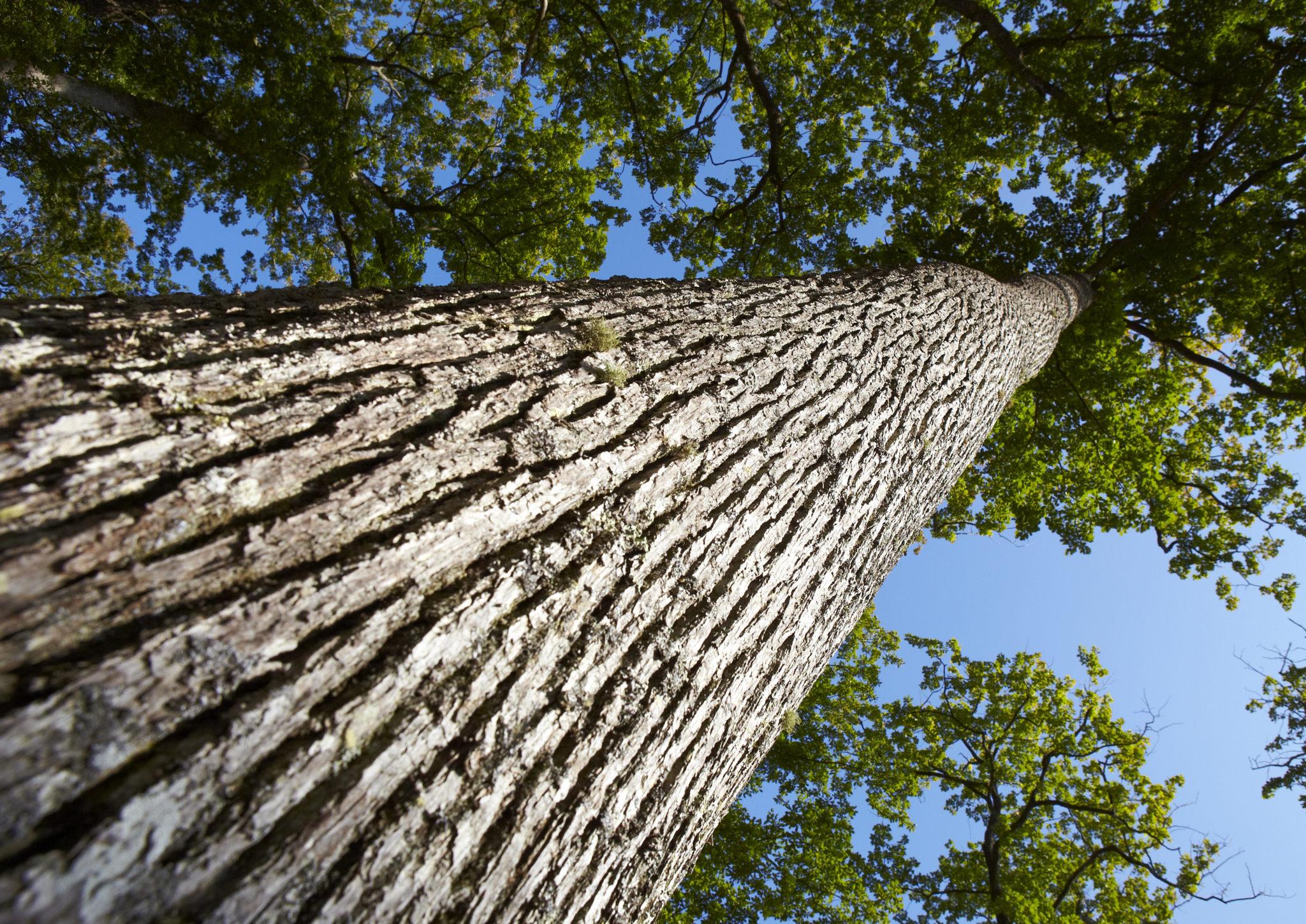 Arbre forêt Bio Création Bois