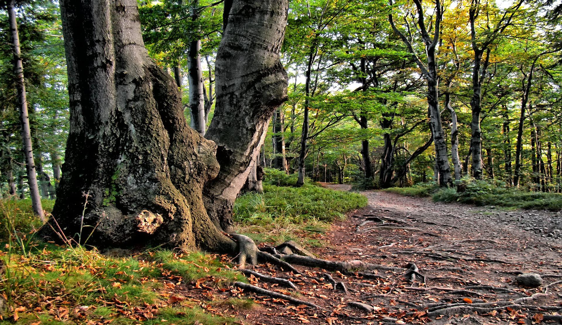 Arbre Forêt BCB